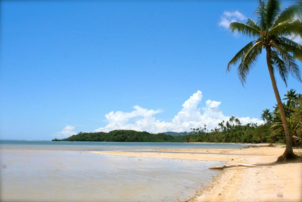 Palm trees on the beach in Savusavu, Fiji.