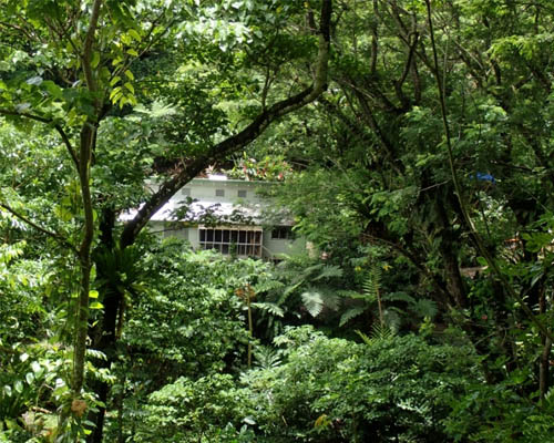 A building surrounded by lush tropical rainforest.