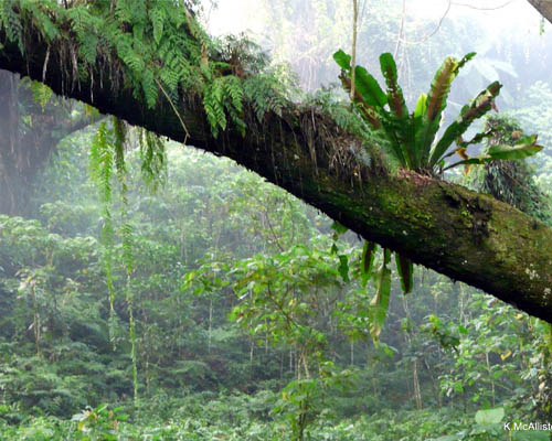 A mossy log hangs over the misty tropical gardens.