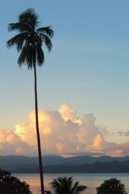 Palm trees in the sunset in Savusavu, Fiji.